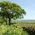 Colyton Rambling Routes from Beer Devon